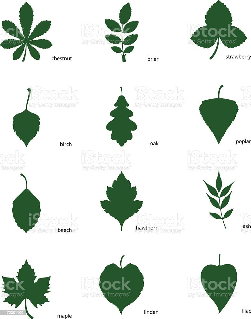Set of silhouettes of leaves of different trees vector art illustration