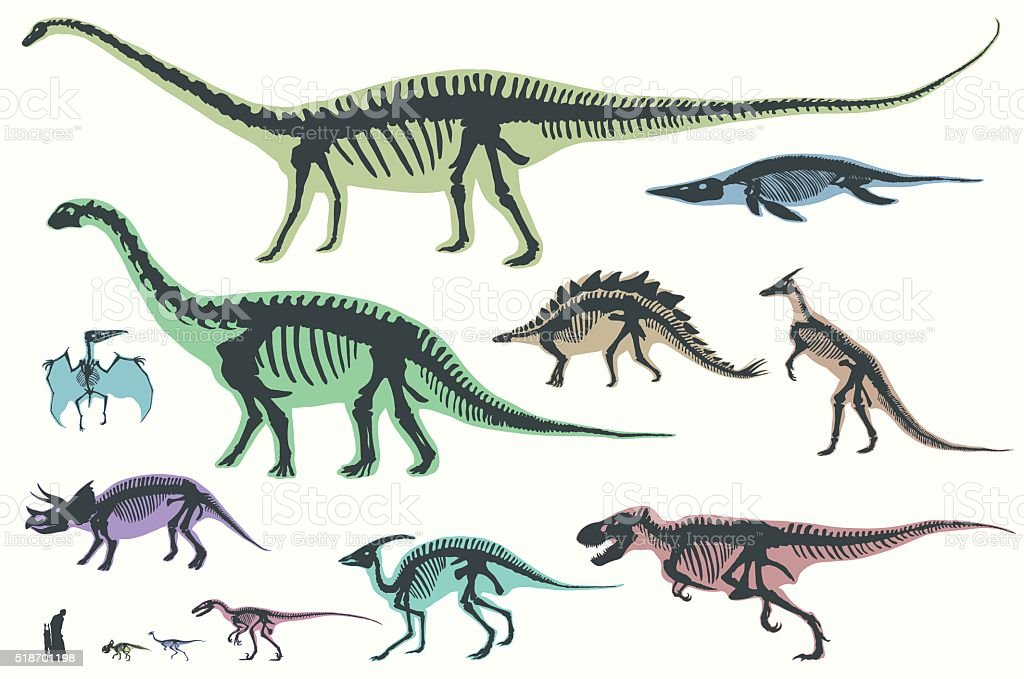 Set of silhouettes of skeletons of dinosaurs and fossils. vector art illustration