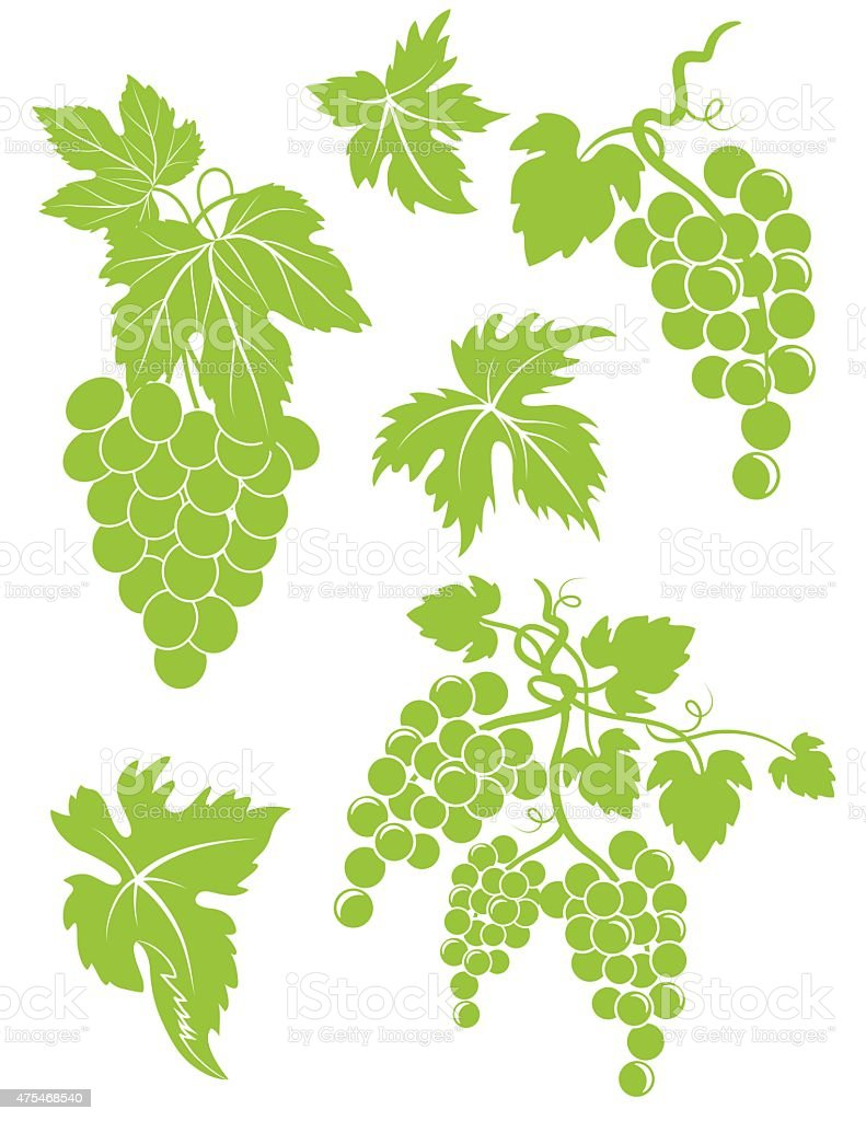 Set Of Simple Grapes Bunches And Leaves vector art illustration