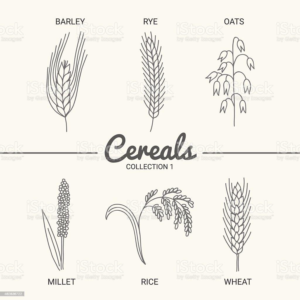 Set of six cereals vector art illustration