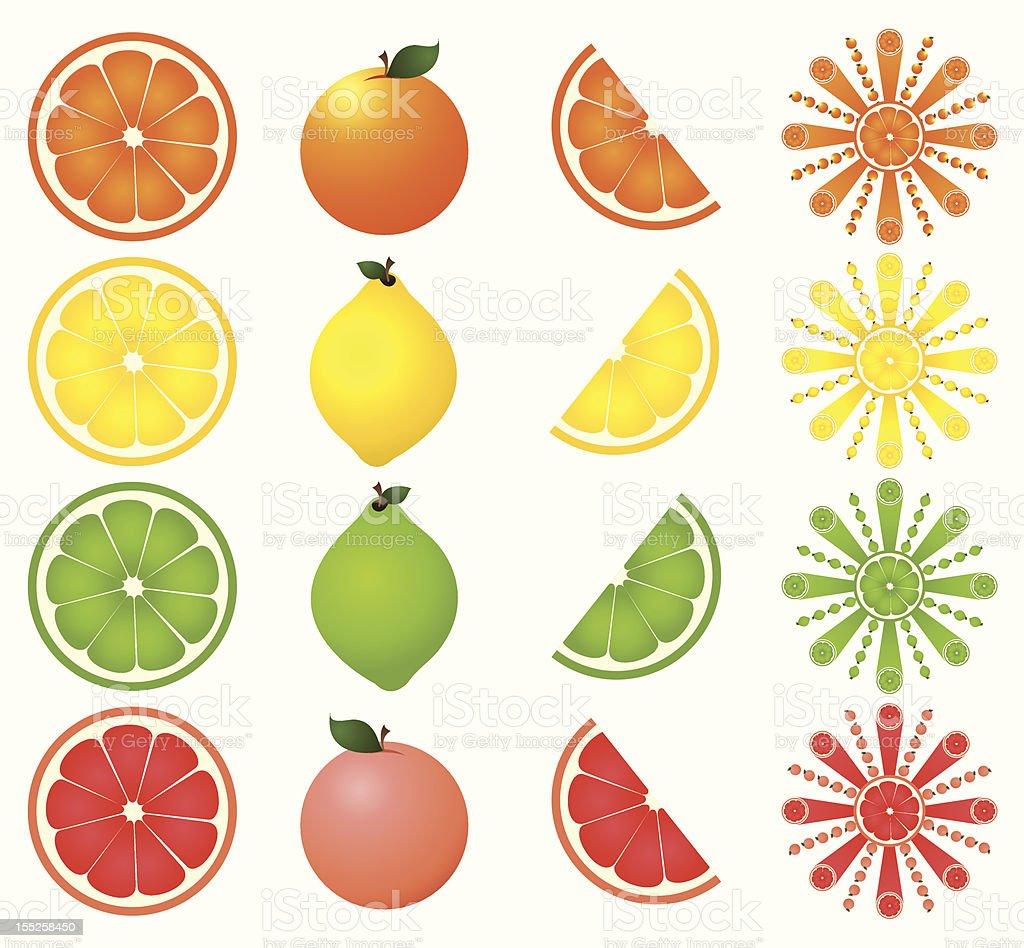Set of sixteen citrus fruit icons vector art illustration