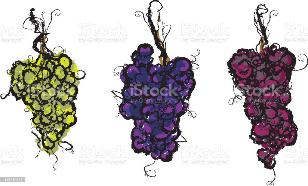 Set of sketchy grapes with vine stems vector art illustration