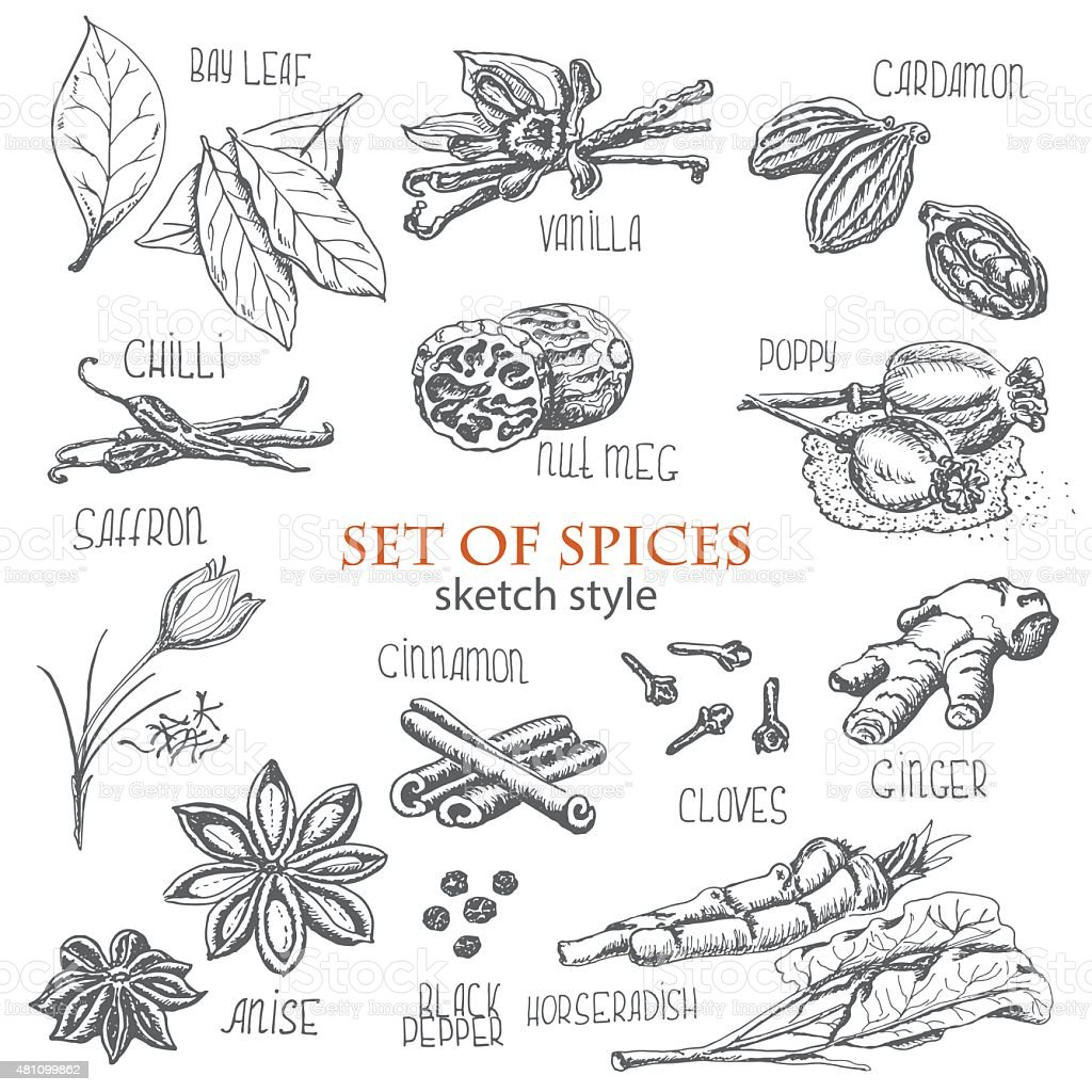 set of spices in sketch style vector art illustration