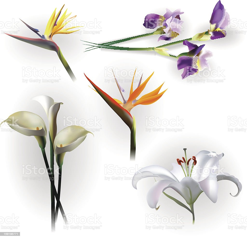 Set of spring flowers for design purposes royalty-free stock vector art