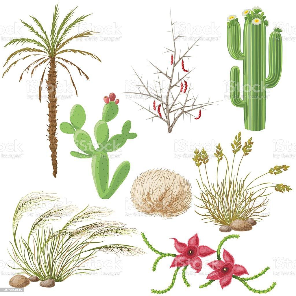 Set of Steppe and Desert Plants vector art illustration