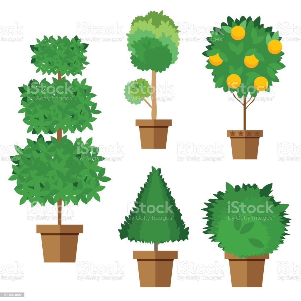 Set of street trees and shrubs in pots. Vector, illustration in flat style isolated on white background EPS10. vector art illustration
