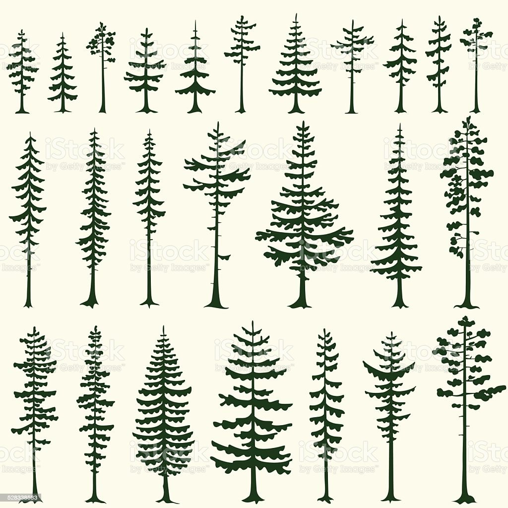 Set of stylized pine silhouettes. Vector illustration. vector art illustration