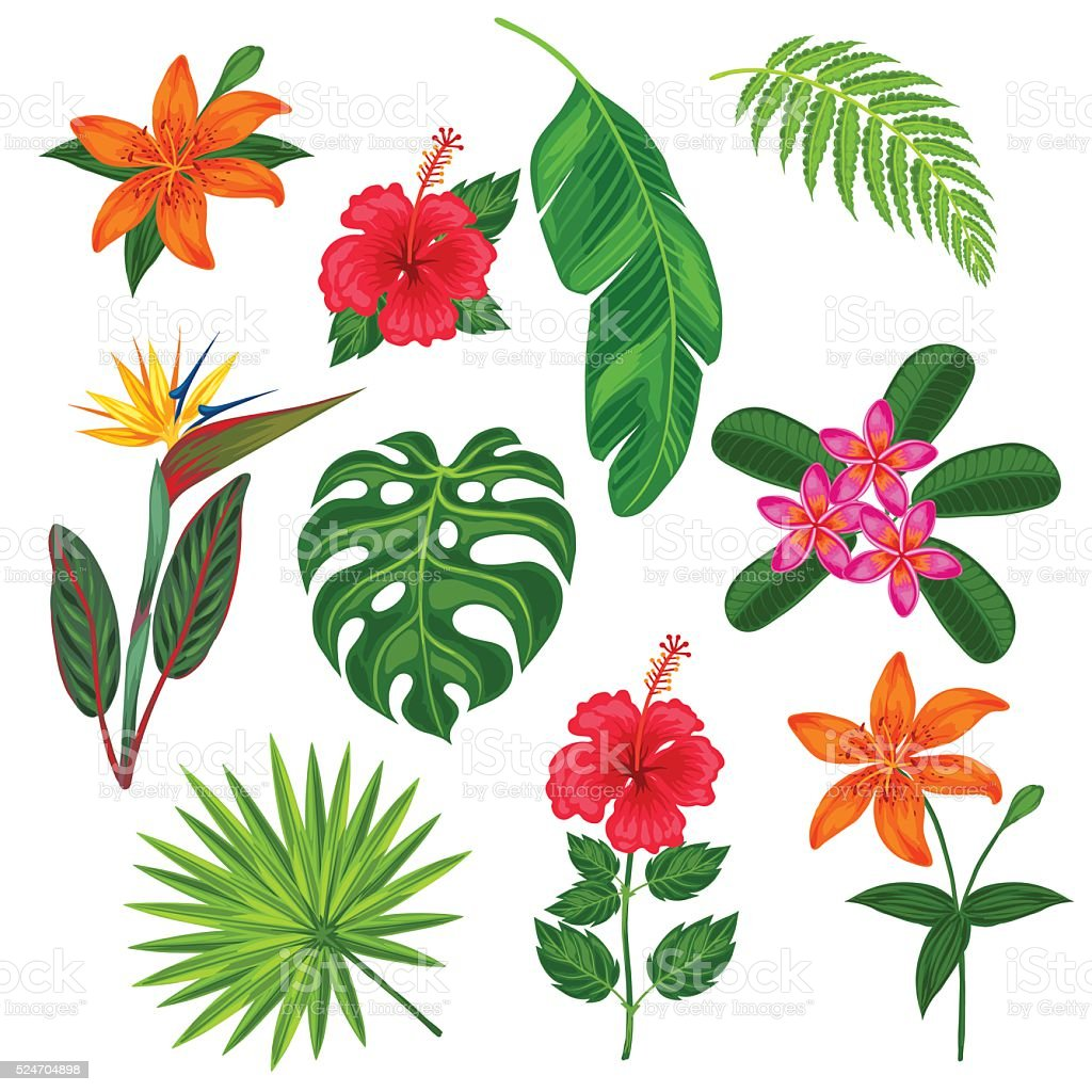 Set of stylized tropical plants, leaves and flowers. Objects for vector art illustration