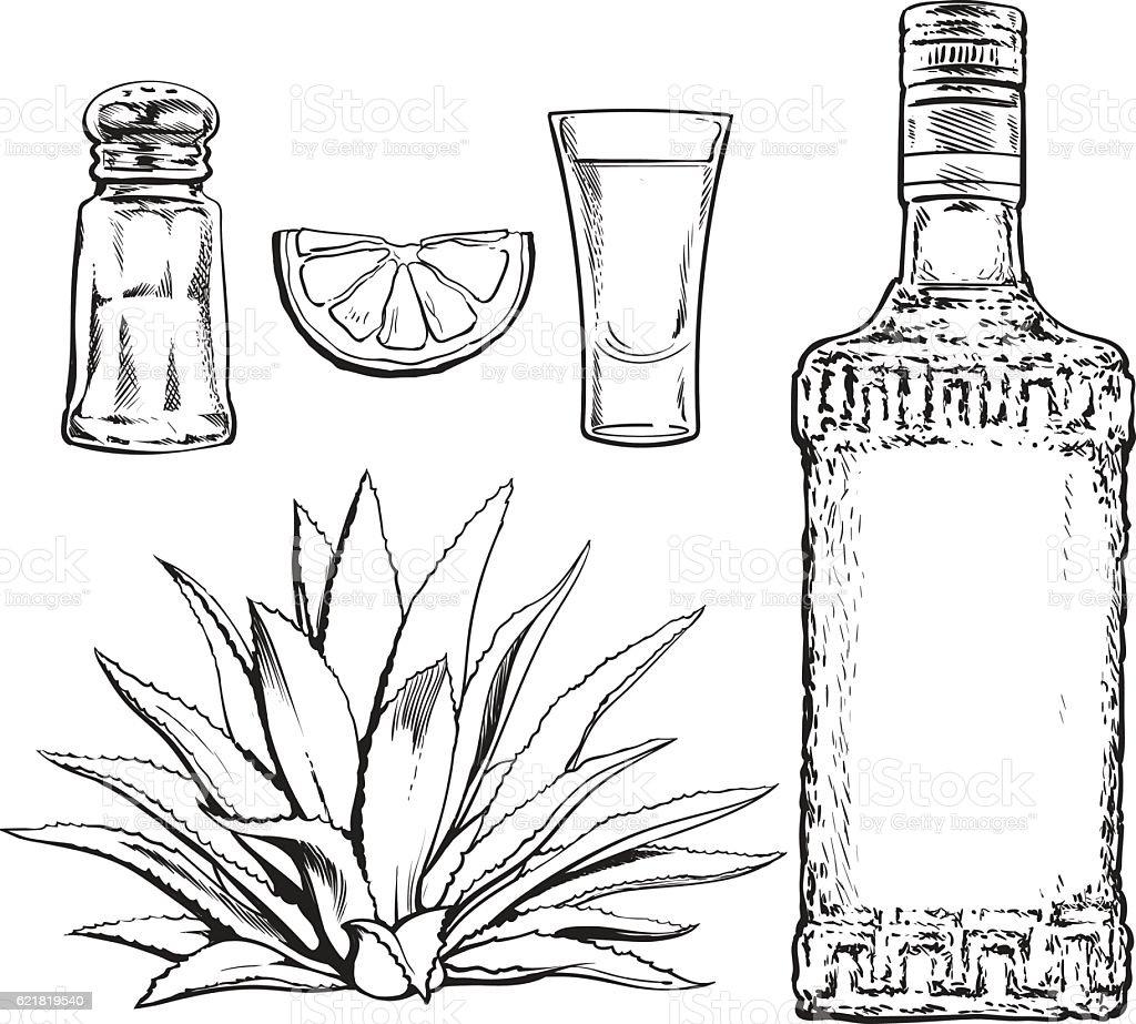Set of tequila bottle, shot, salt mill, agave and lime vector art illustration