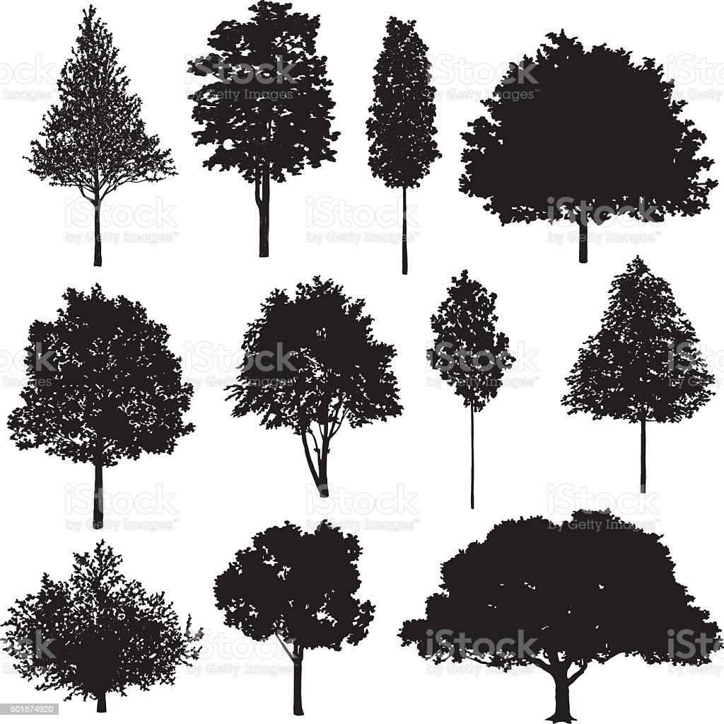 Set Of Tree Drawings vector art illustration