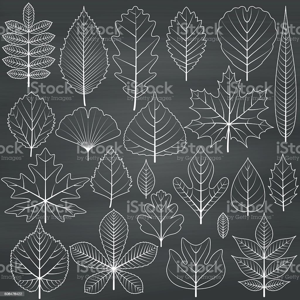 Set of tree leaves on chalkboard background vector art illustration