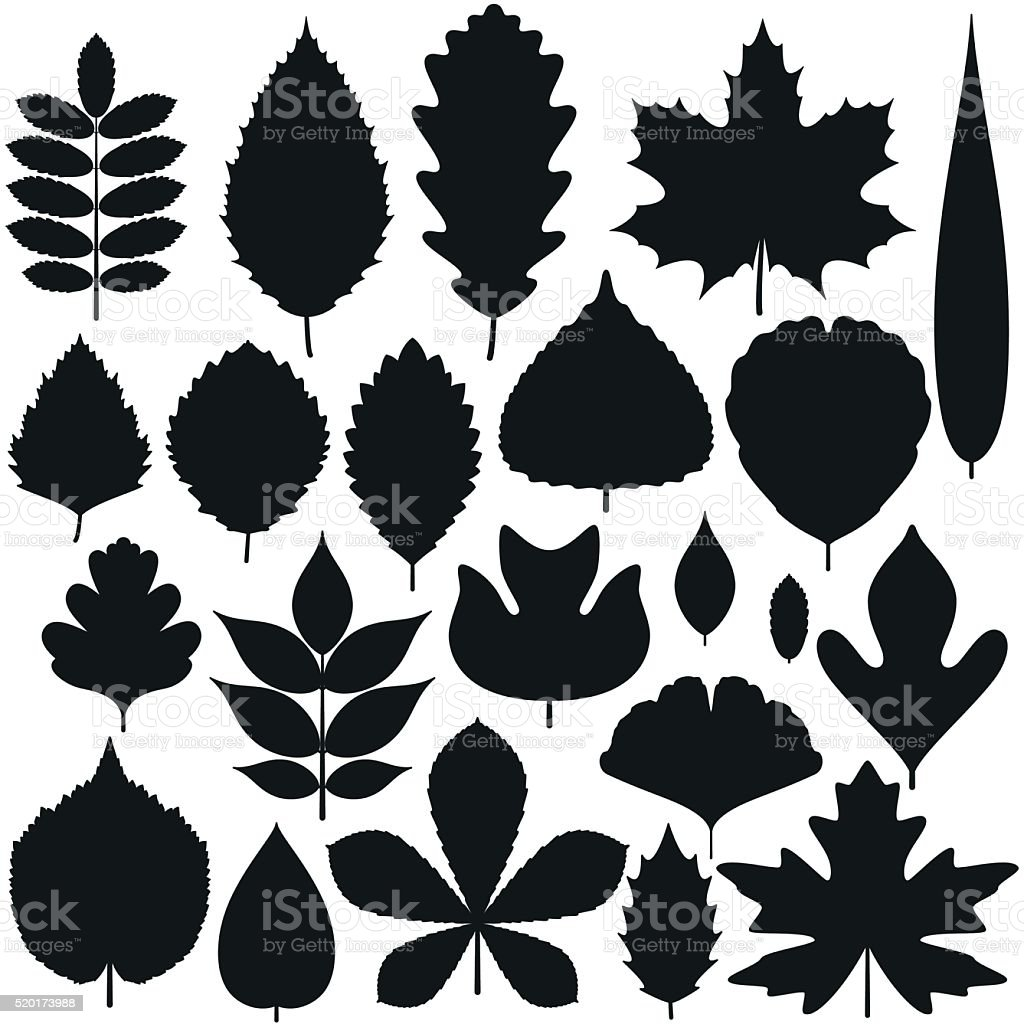 Set of tree leaves. Silhouette icons. Vector illustration. vector art illustration