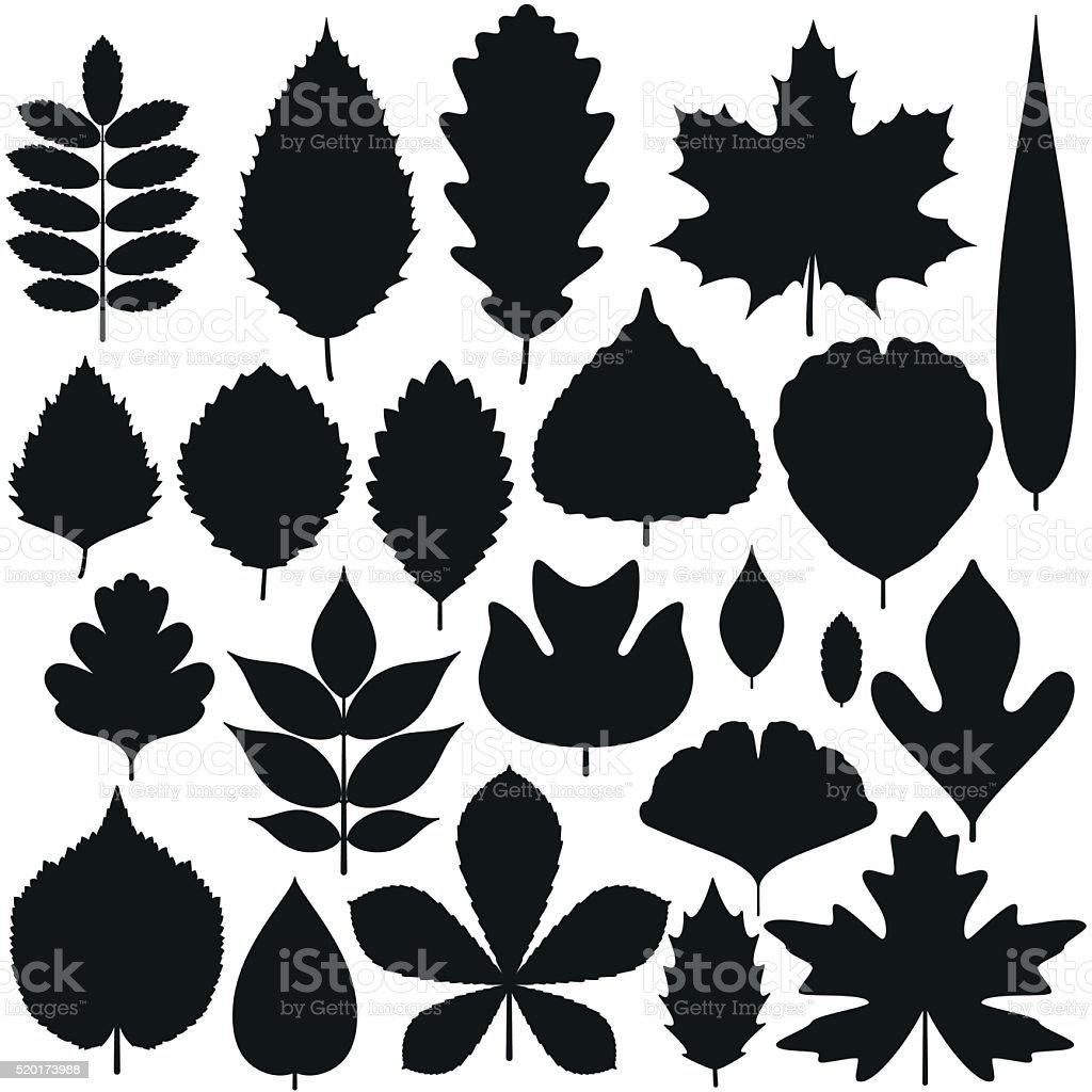 Set of tree leaves. Silhouette icons. Vector illustration. vector art illustration