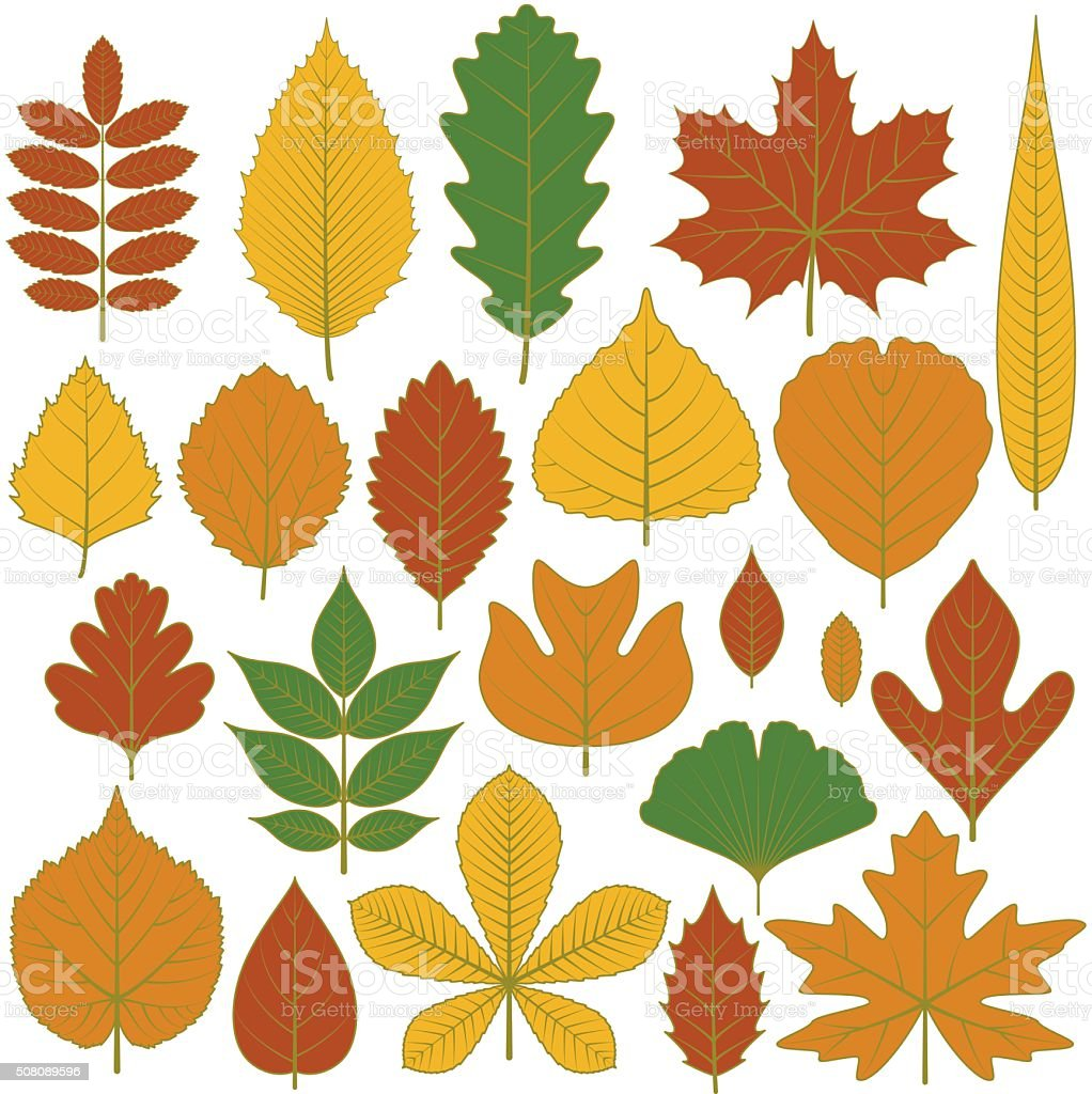 Set of tree leaves. Twenty different icons vector art illustration