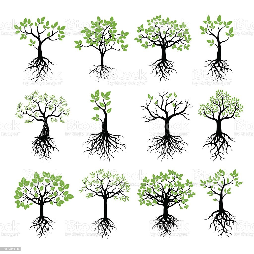 Set of Trees, Green Leafs and Roots vector art illustration