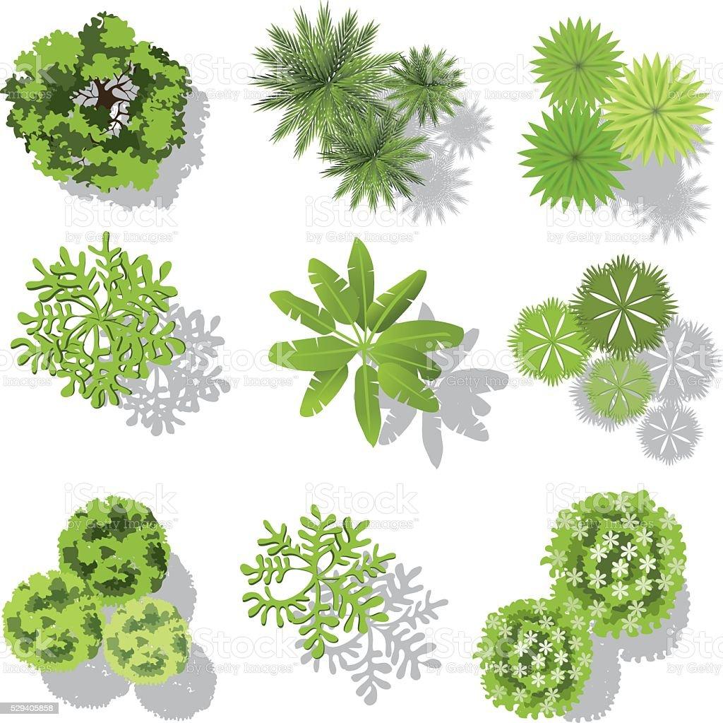 set of treetop symbols, for architectural or landscape design vector art illustration