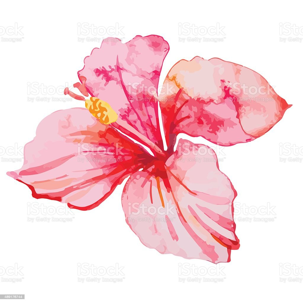 Set of tropical flowers. Hibiscus. Leaves vector art illustration