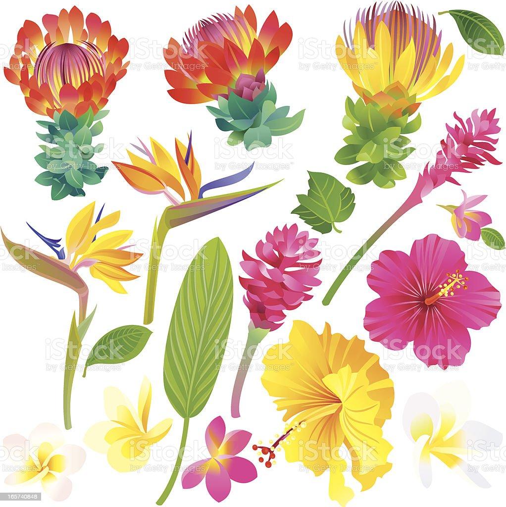 Set of Tropical Flowers vector art illustration
