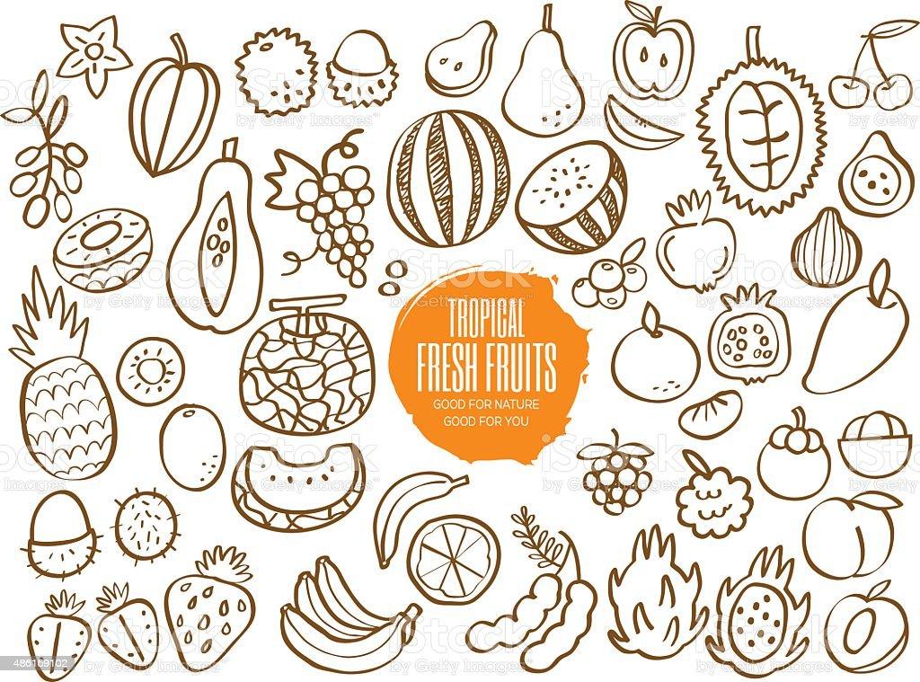 Set of tropical fruit doodles vector art illustration