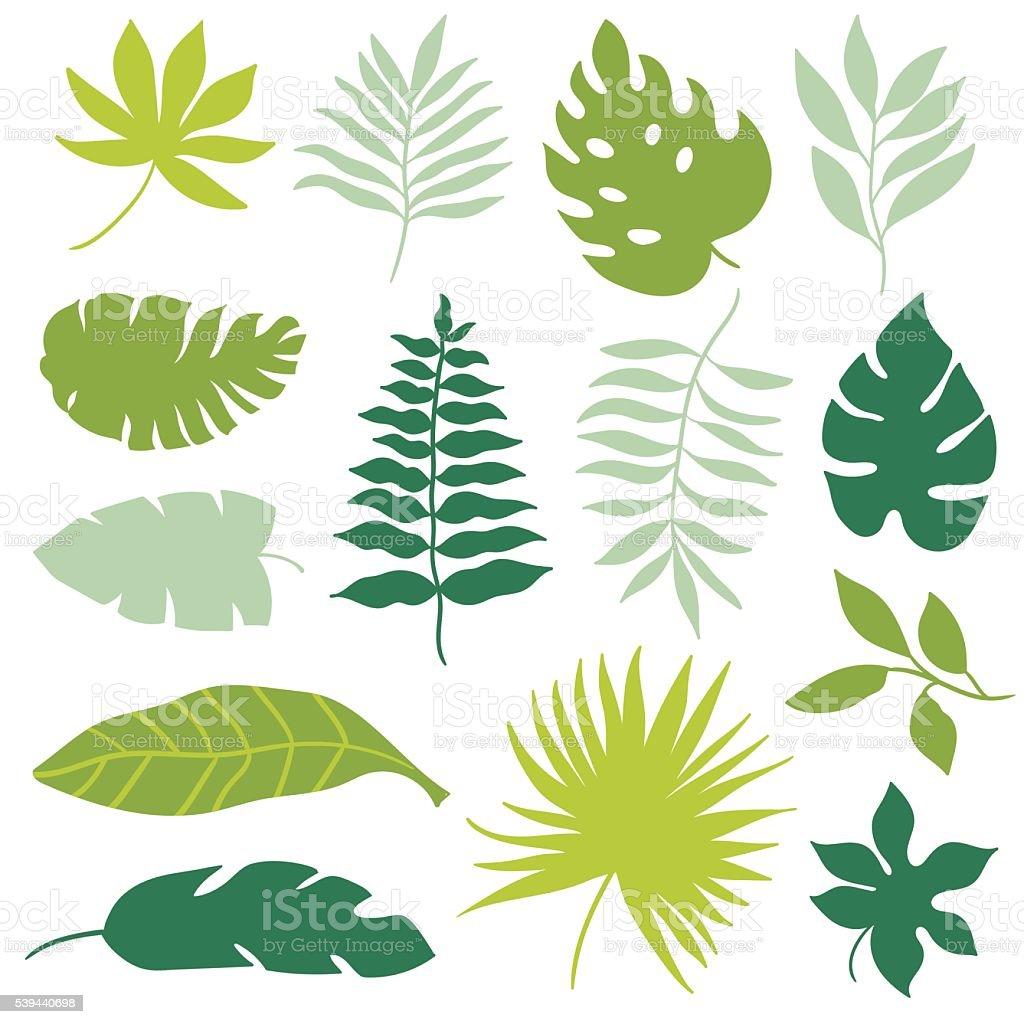 set of tropical leaves vector art illustration