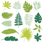 set of tropical leaves