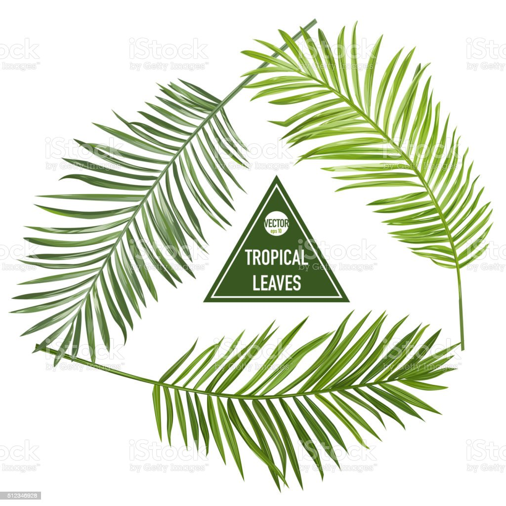 Set of Tropical Palm Leaves - for design elements, scrapbooking vector art illustration
