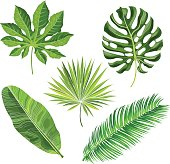Set of tropical palm leaves, vector illustration