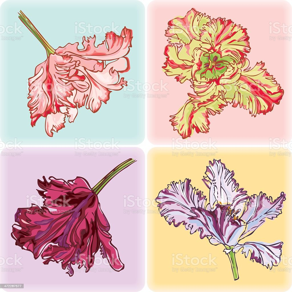 Set of Tulips Cards royalty-free stock vector art
