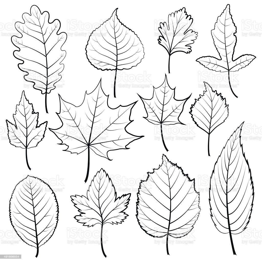 Set of twelve black and white leaves on a white background. vector art illustration