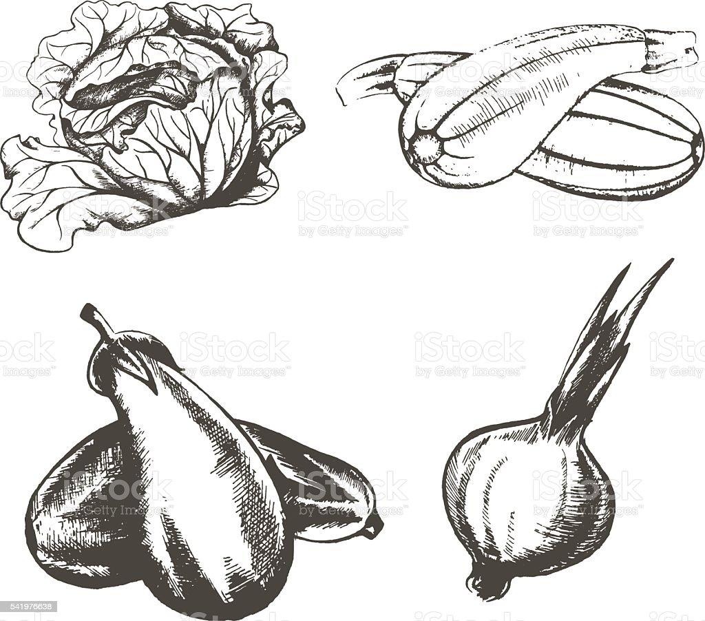 set of v of vegetables on a white background vector art illustration