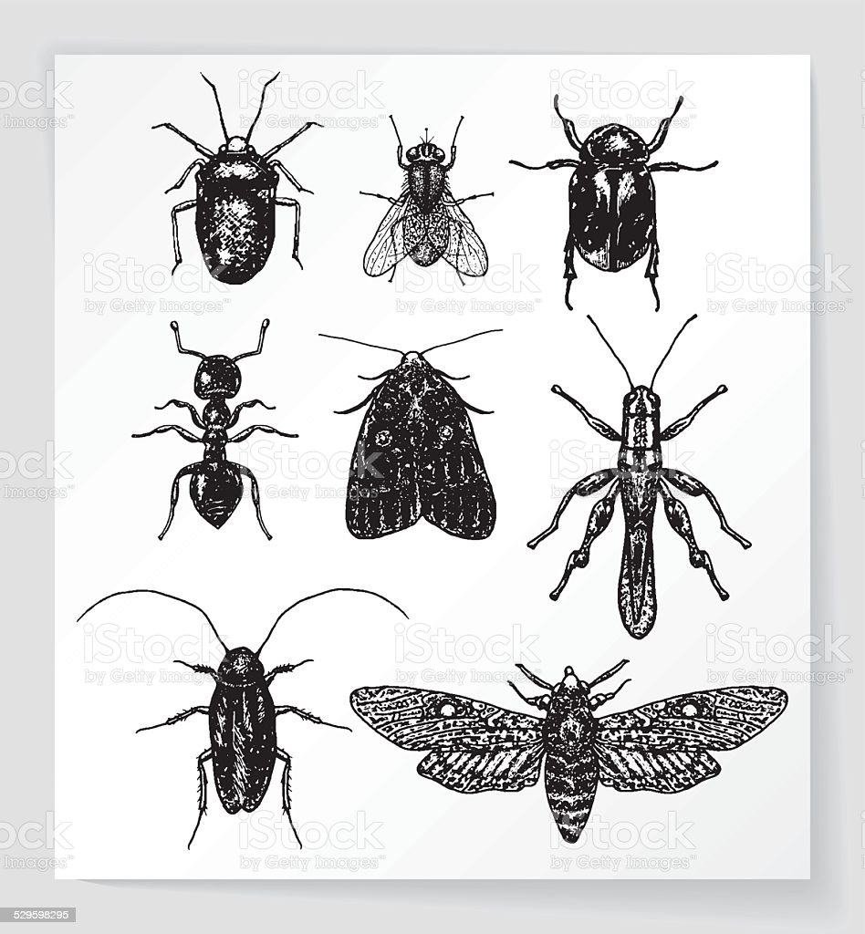 Set of various bugs and insects vector art illustration