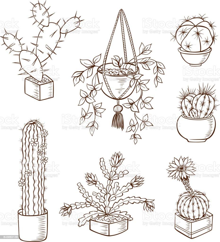 Set of various houseplants vector art illustration