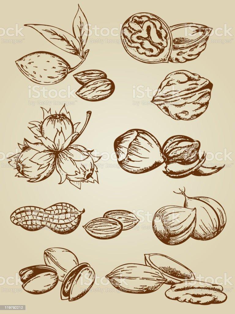 set of various nuts vector art illustration