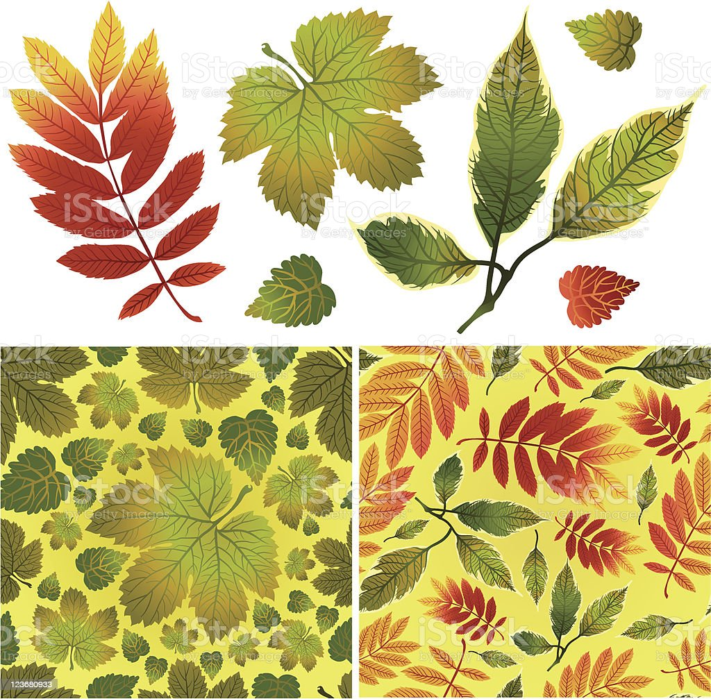 Set of vector autumn leaves and seamless backgrounds royalty-free stock vector art