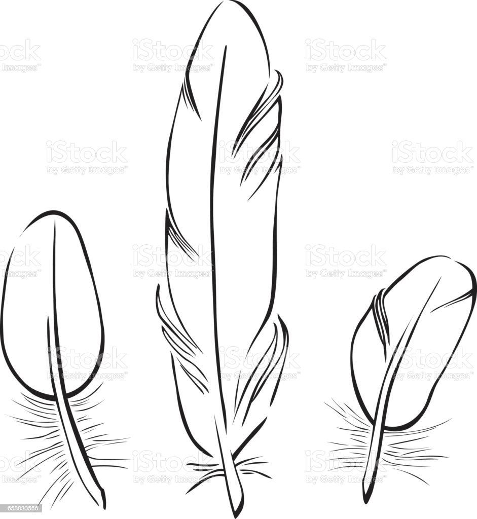 Set of Vector Feather Line Drawings vector art illustration