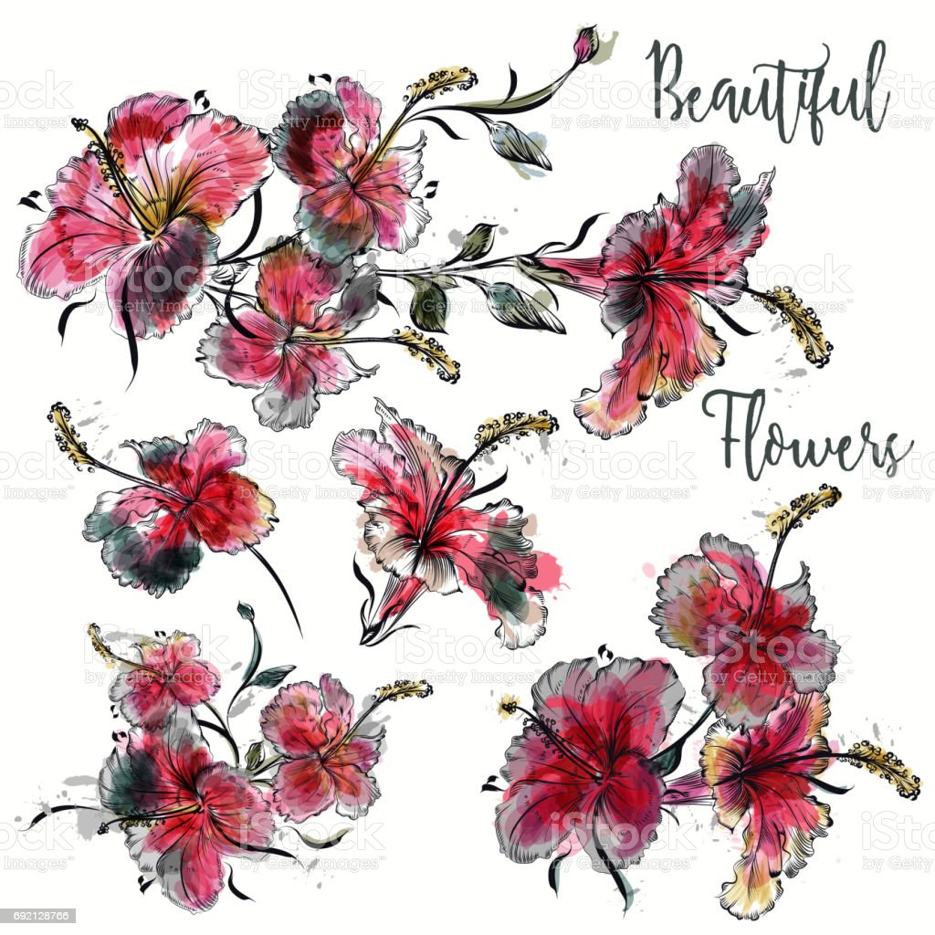 Set Of Vector Hibiscus Flowers In Watercolor Style For Design Stock