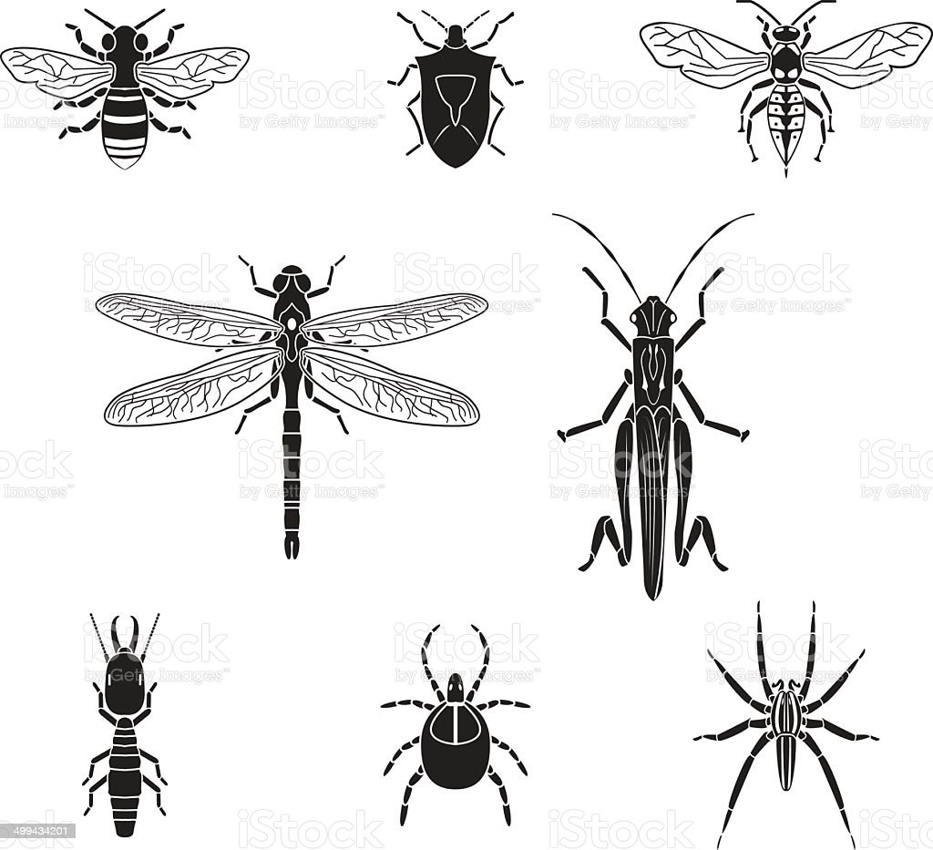 Set of vector insects volume 3 vector art illustration