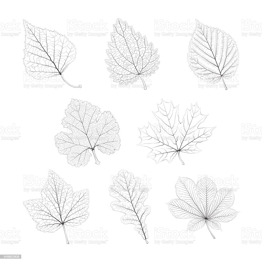 Set of vector isolated monochrome single leaves vector art illustration