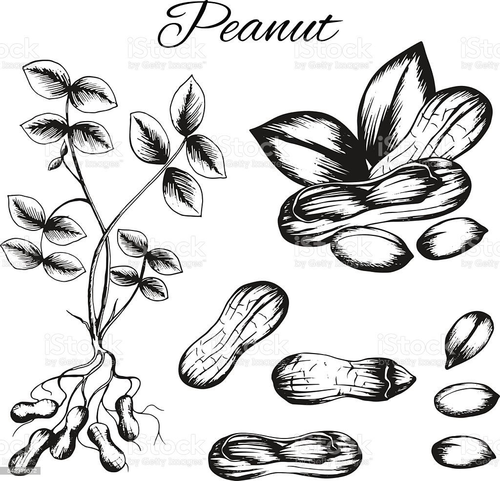 Set of vector sketches vector art illustration