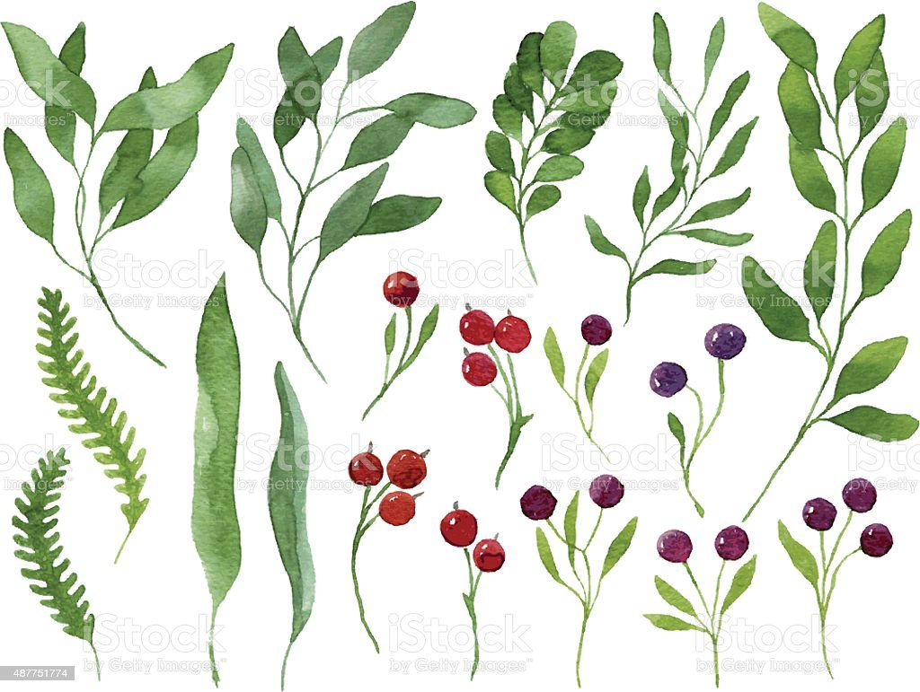 Set of vector watercolor leaves, berries and branches vector art illustration