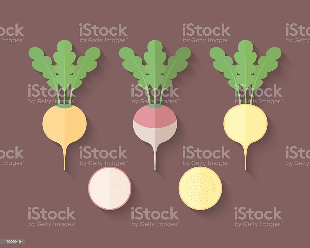 Set of Vegetables in a Flat Style - Turnip vector art illustration