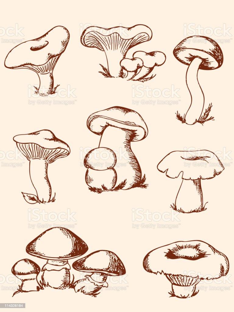 set of vintage forest mushrooms royalty-free stock vector art