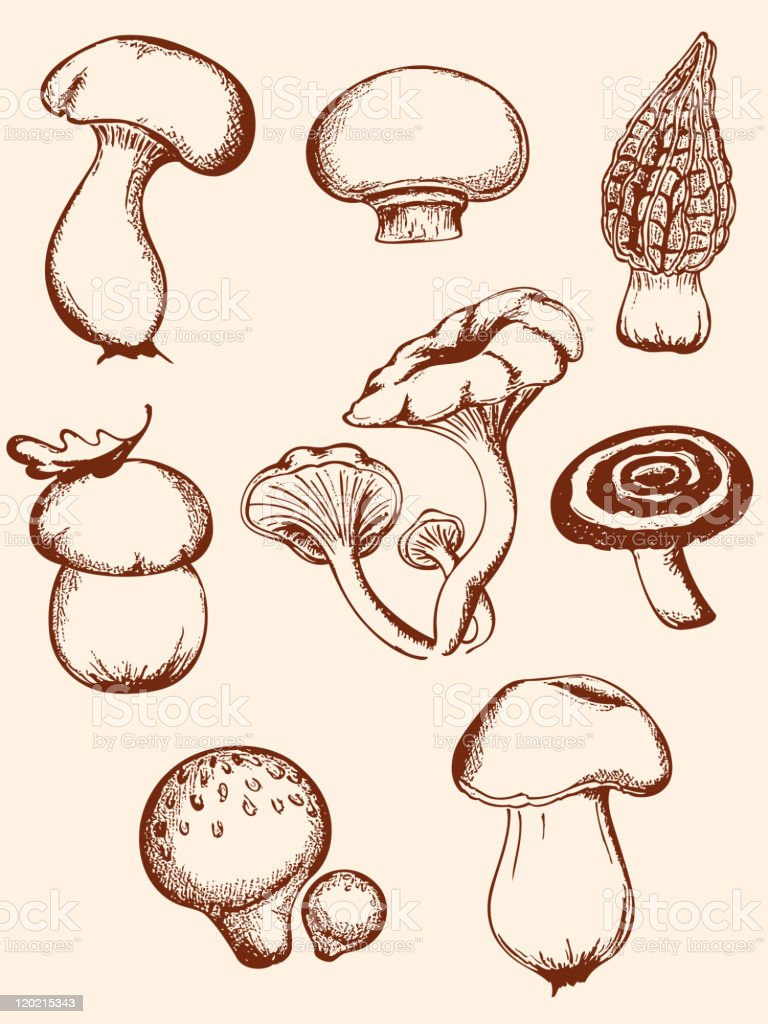 set of vintage forest mushrooms royalty-free stock vector art