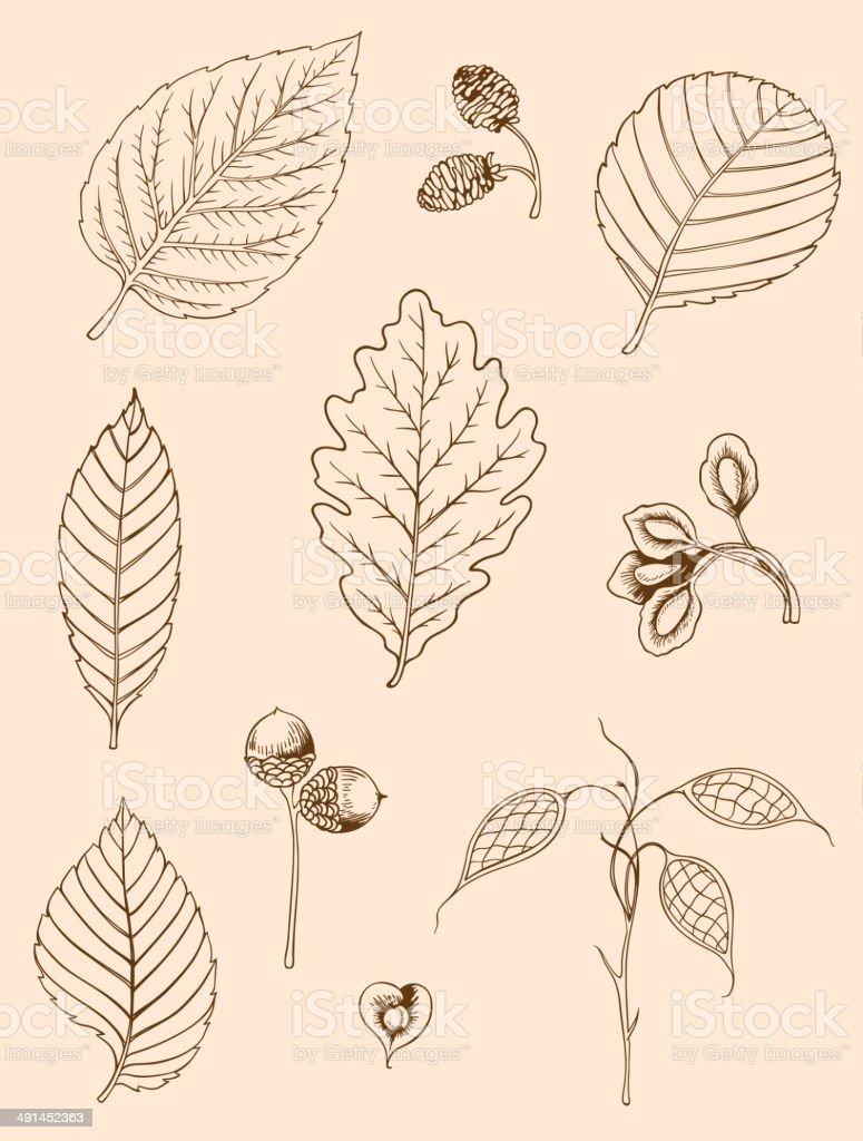 Set of vintage leaves vector art illustration
