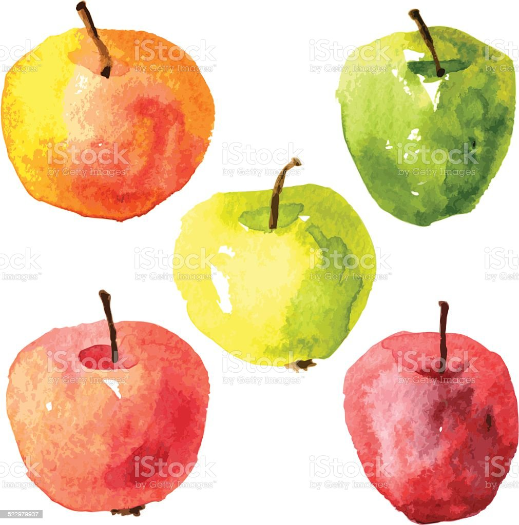 Set of  watercolor drawing apples vector art illustration