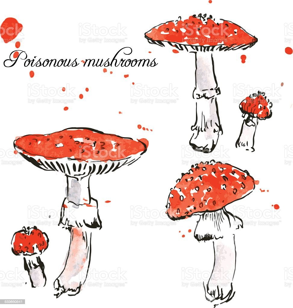 Set of watercolor drawing poisonous mushrooms vector art illustration