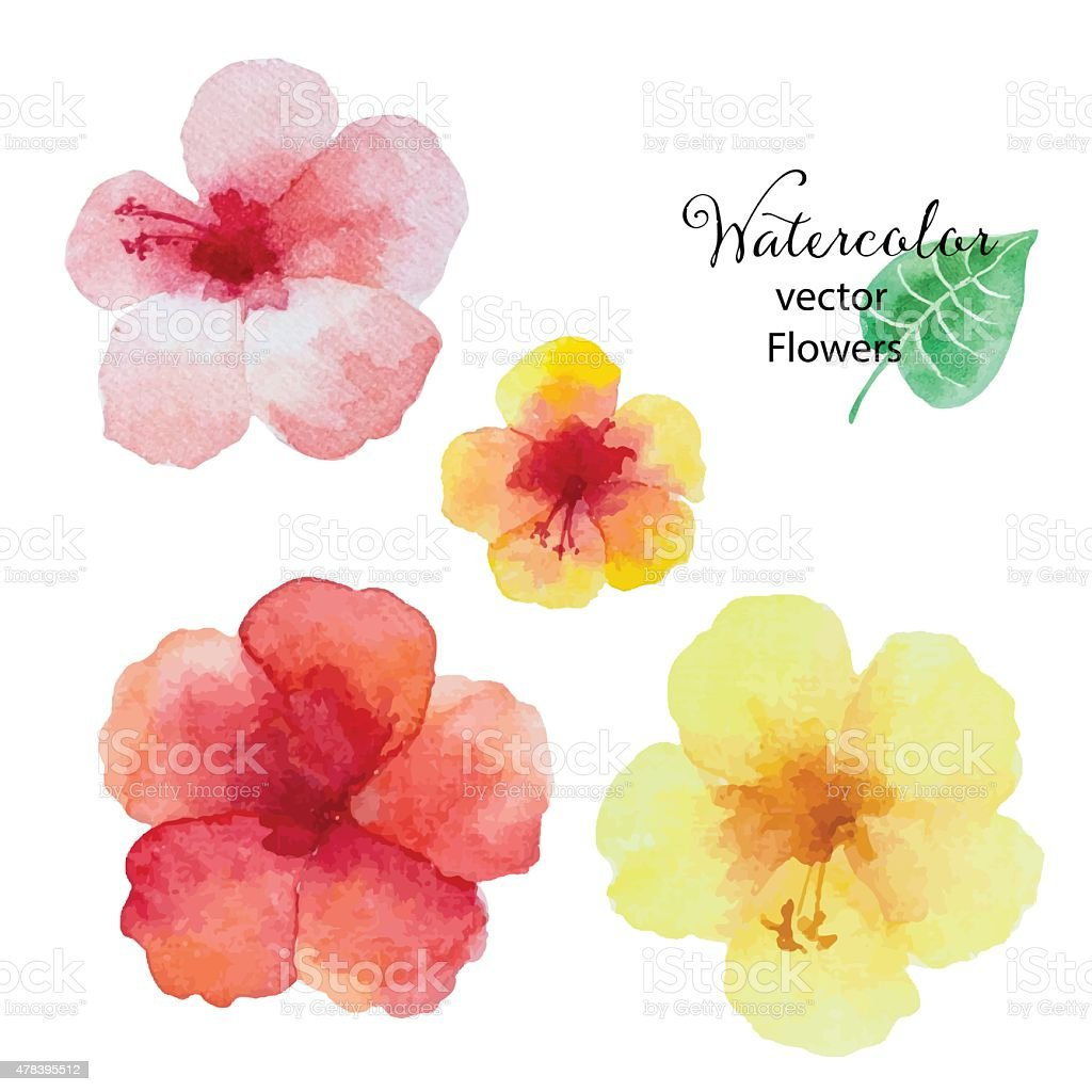Set of watercolor hibiscus flowers. vector art illustration