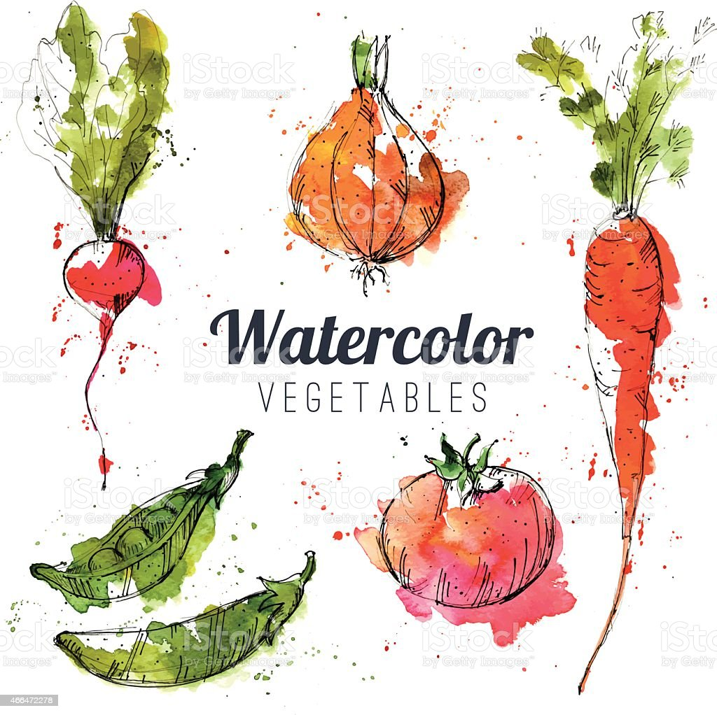 Set of watercolor vegetables vector art illustration