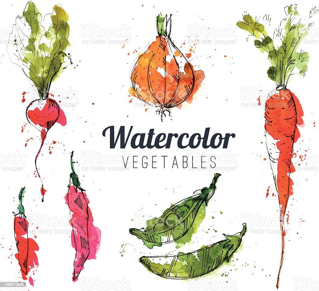 Set of watercolor vegetables vector art illustration