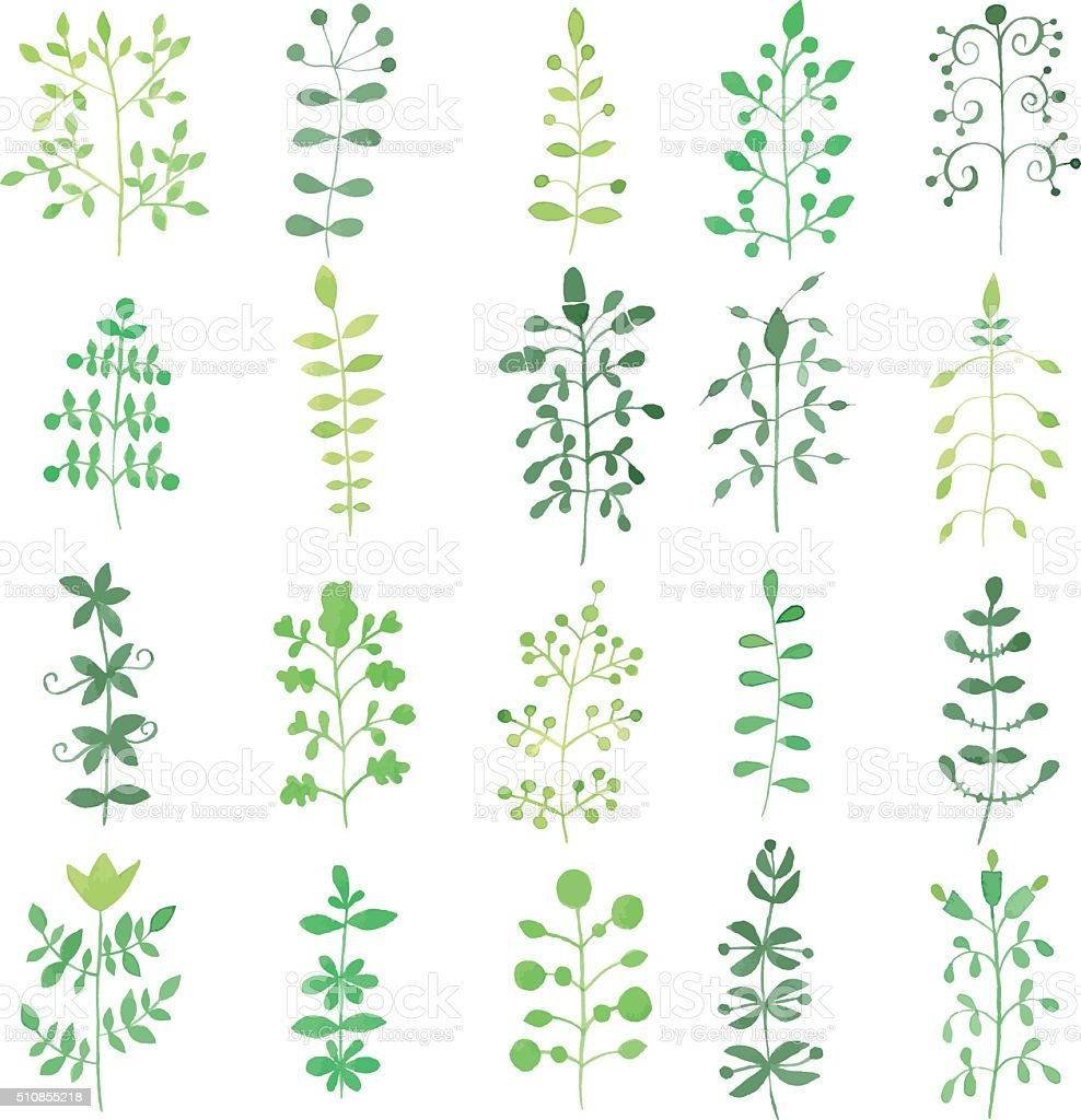 Set of watercolor young green branches/sprigs with leaves and flowers. vector art illustration